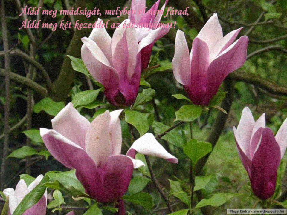 Áldd meg édesanyám járását – kelését, Áldd meg könnyhullatását, áldd meg szenvedését!