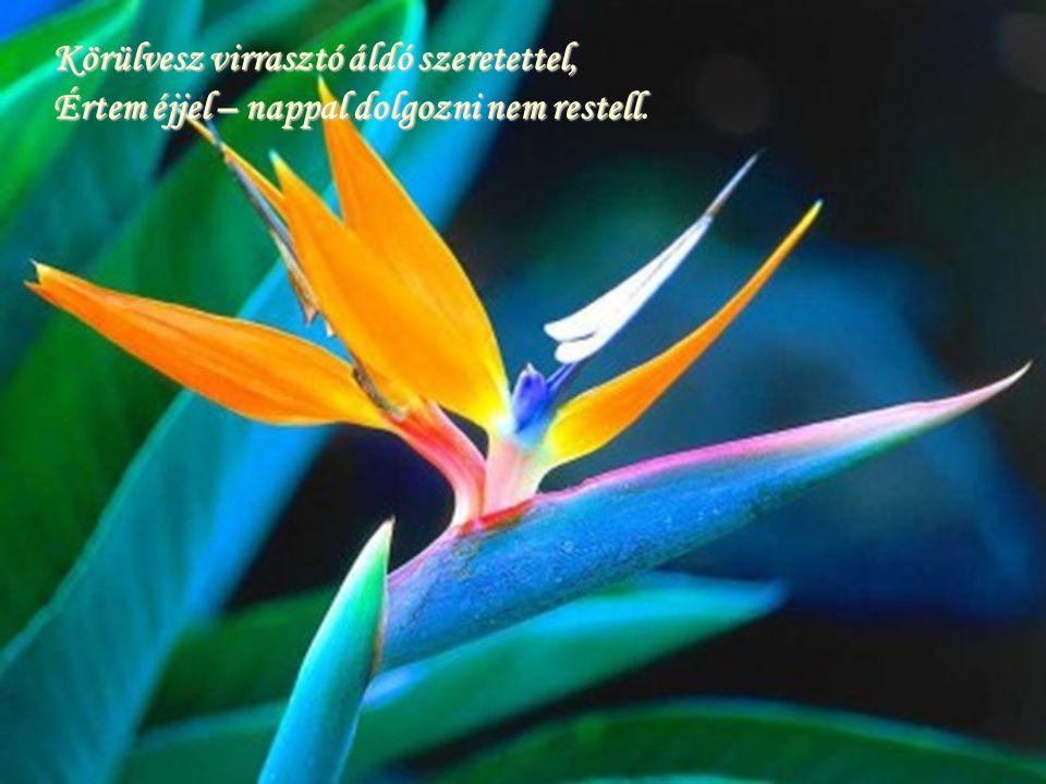 Körülvesz virrasztó áldó szeretettel, Értem éjjel – nappal dolgozni nem restell restell.