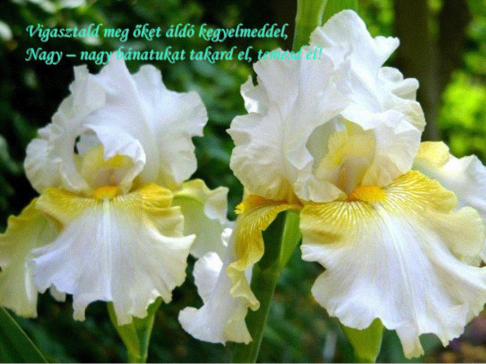 Vigasztald meg őket áldó kegyelmeddel, Nagy – nagy bánatukat takard el, temesd el!
