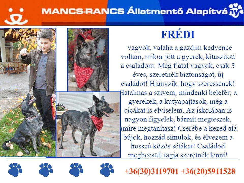 info@mancsrancs.hu www.mancsrancs.hu Képgaléria  http://gallery.site.hu/u/MancsRancs/gazdikeresok/ Adószámunk: 18705645-1-13 Számlaszámunk: Buda Takarék Szövetkezeti Hitelintézet 58300196-16660483 A megmentett állatok nevében köszönjük a támogatásodat.