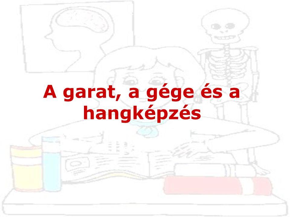 1. Garat(pharynx)
