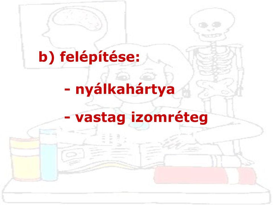 d) alkotó részei: - pajzsporc: (cartilago thyroidea)