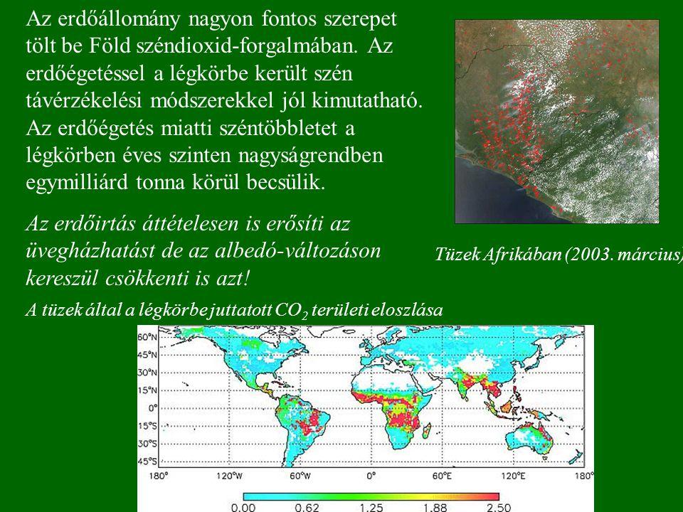 Az erdőállomány nagyon fontos szerepet tölt be Föld széndioxid-forgalmában.