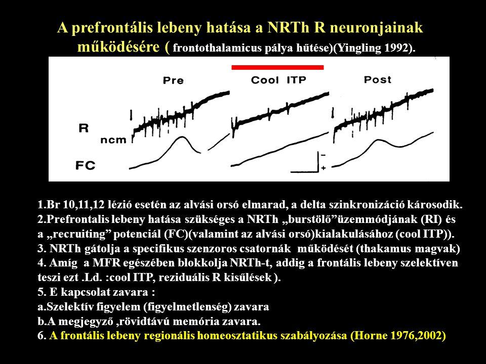 A prefrontális lebeny hatása a NRTh R neuronjainak működésére ( frontothalamicus pálya hűtése)(Yingling 1992).