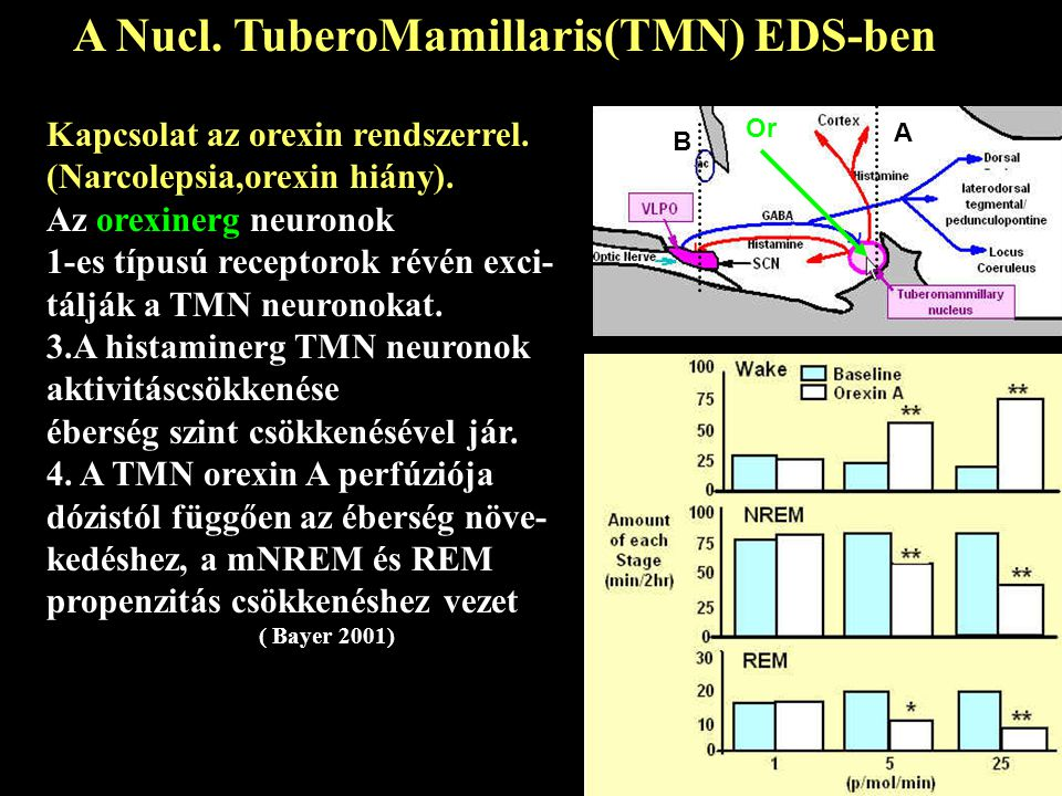 Kapcsolat az orexin rendszerrel.(Narcolepsia,orexin hiány).