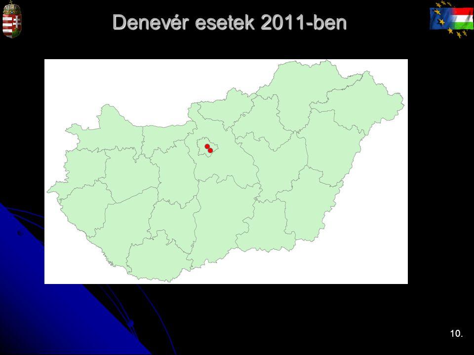 Denevér esetek 2011-ben 10.