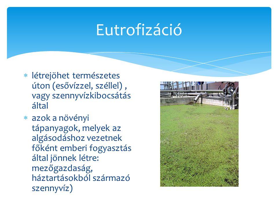Eutrofizáció  Következményei: o minél több a növényzet a víz felszínén, annál kevesebb fény jut be a víz mélyebb rétegeibe o ez a túlszaporodás a növények saját pusztulásához vezet (amikor ennek következtében a fitoplanktonok elpusztulnak, a baktériumok megeszik őket -> ez a folyamat felhasználja a vízben lévő oxigént -> ennek következtében kialakuló oxigénhiány a növényzet pusztulásához vezet, melynek következménye a halpusztulás)