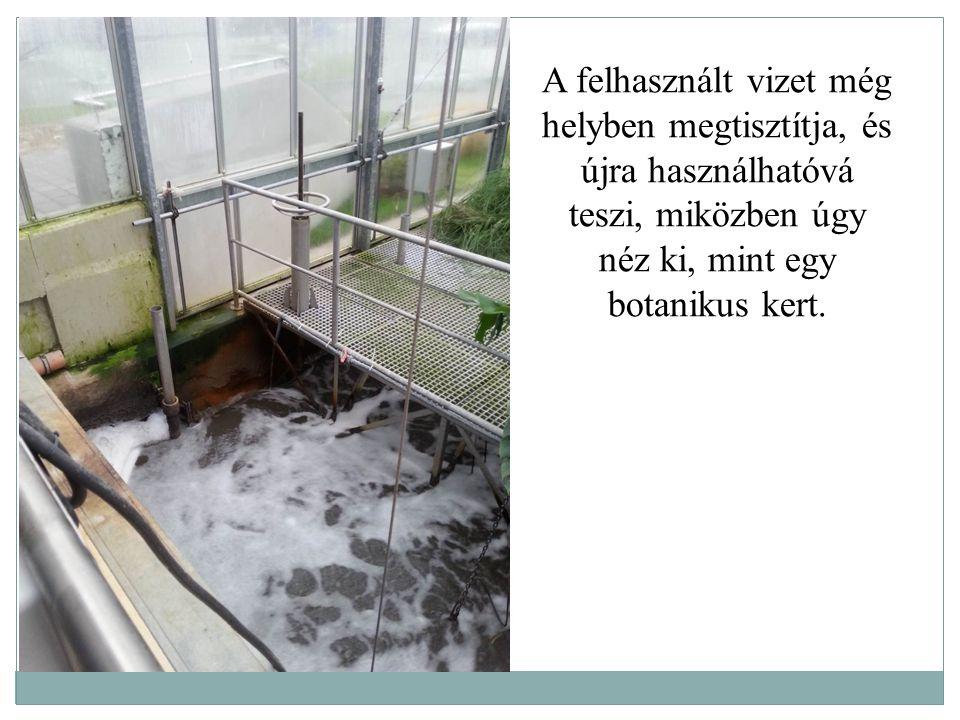 A felhasznált vizet még helyben megtisztítja, és újra használhatóvá teszi, miközben úgy néz ki, mint egy botanikus kert.