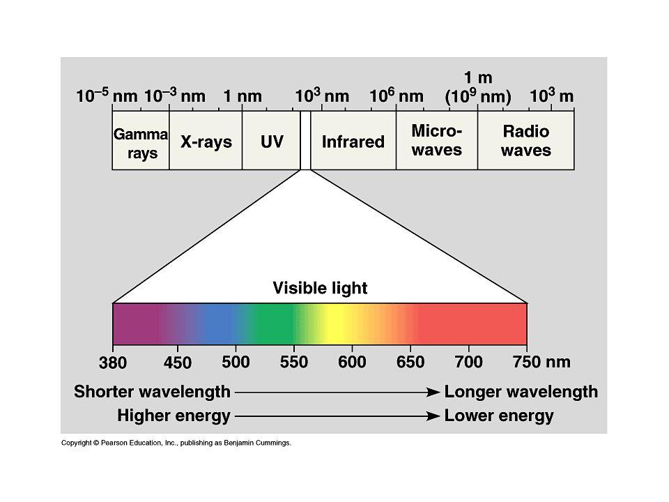 A fény abszorpciója és a gerjesztési energia sorsa Fotoszintetikusan aktív fény ~ 400-700 nm-ig Klorofill molekula: alapállapot (S 0 ), Egy  elektron kötő pályáról lazító pályára lép.