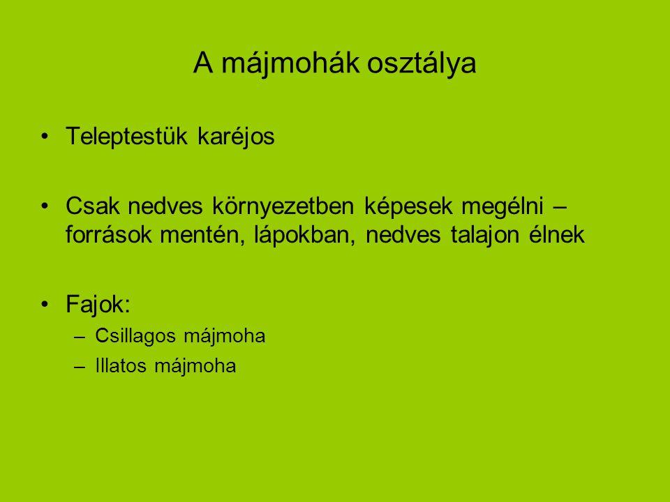 A lombosmohák osztálya Tagoltabb testfelépítés Fajok: Hegyeslevelű ligetmoha Tőzegmoha:savanyú talajon, lápokban élnek; alsó elhalt részük alakul tőzeggé Háztetőmoha: Ciprusmoha Őszmoha Szőrmoha