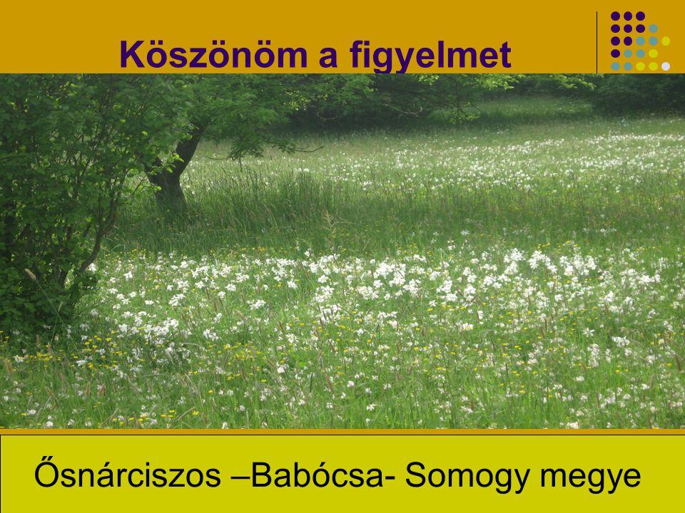 Köszönöm a figyelmet Ősnárciszos –Babócsa- Somogy megye