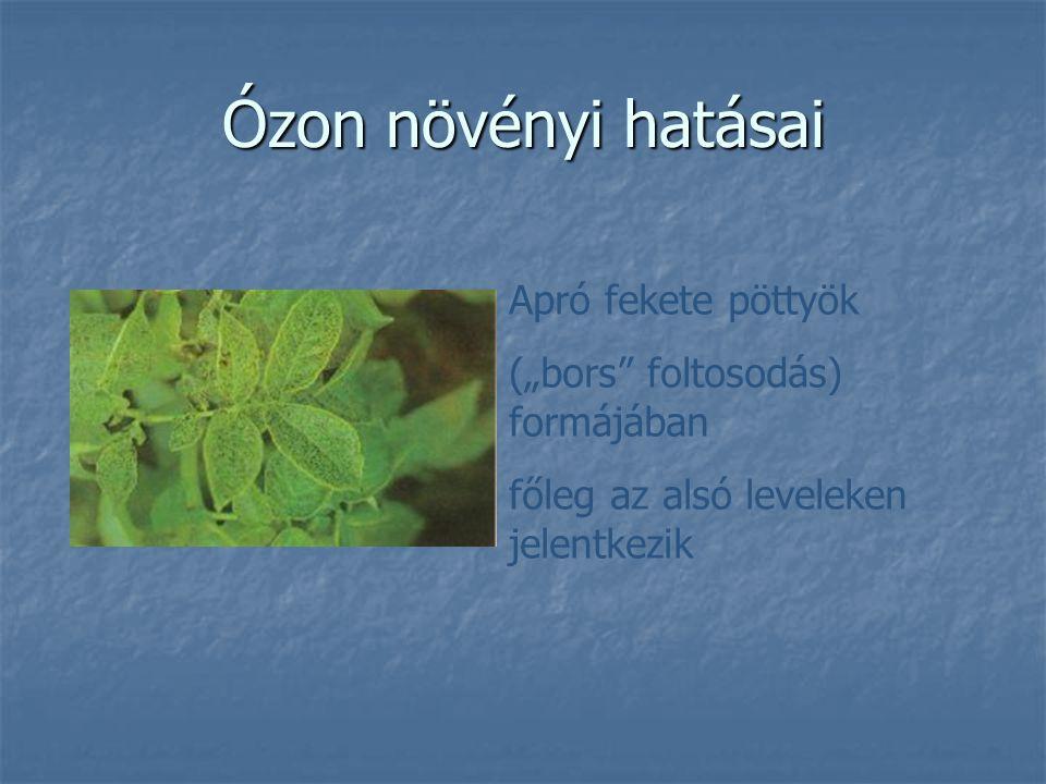 """Ózon növényi hatásai Apró fekete pöttyök (""""bors"""" foltosodás) formájában főleg az alsó leveleken jelentkezik"""