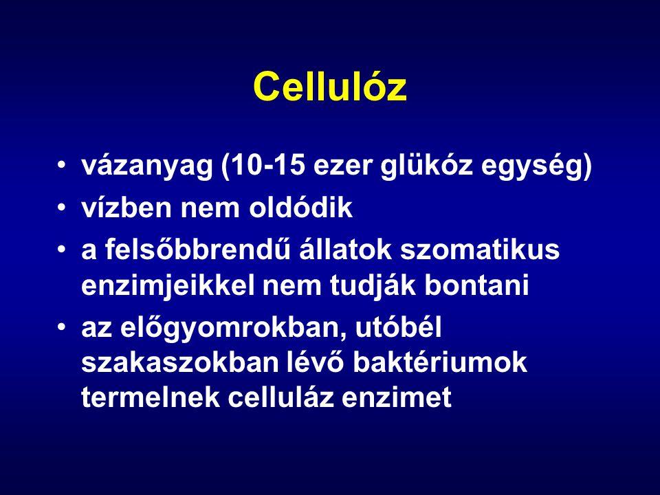 Cellulóz vázanyag (10-15 ezer glükóz egység) vízben nem oldódik a felsőbbrendű állatok szomatikus enzimjeikkel nem tudják bontani az előgyomrokban, utóbél szakaszokban lévő baktériumok termelnek celluláz enzimet