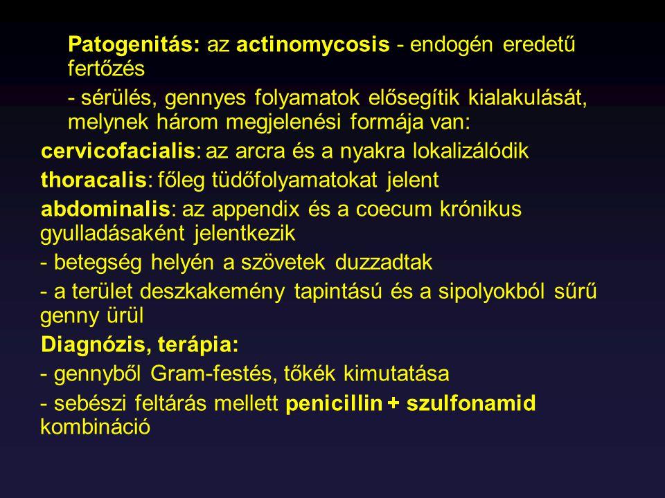 Patogenitás: az actinomycosis - endogén eredetű fertőzés - sérülés, gennyes folyamatok elősegítik kialakulását, melynek három megjelenési formája van: