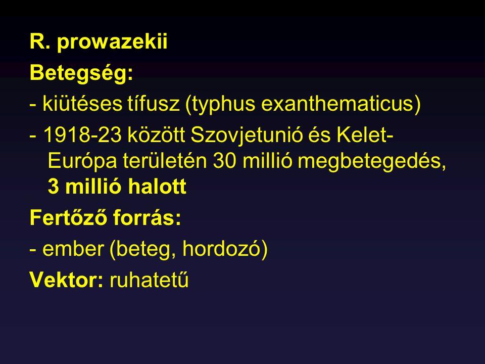 R. prowazekii Betegség: - kiütéses tífusz (typhus exanthematicus) - 1918-23 között Szovjetunió és Kelet- Európa területén 30 millió megbetegedés, 3 mi