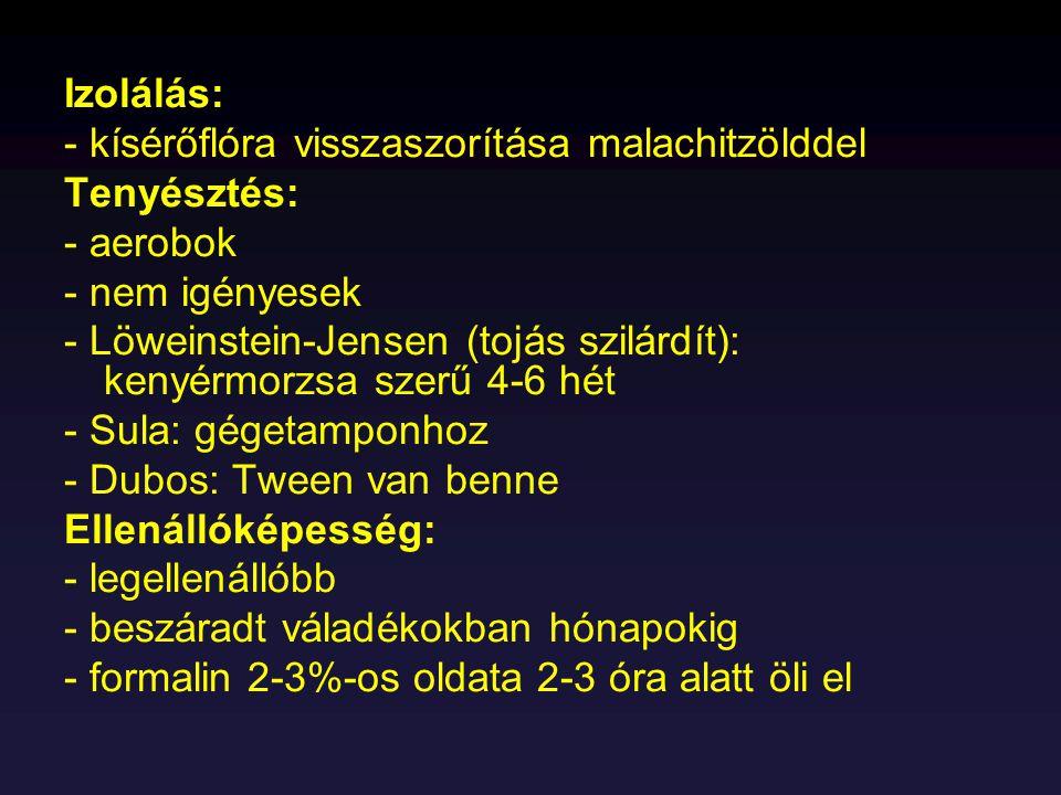 Izolálás: - kísérőflóra visszaszorítása malachitzölddel Tenyésztés: - aerobok - nem igényesek - Löweinstein-Jensen (tojás szilárdít): kenyérmorzsa sze