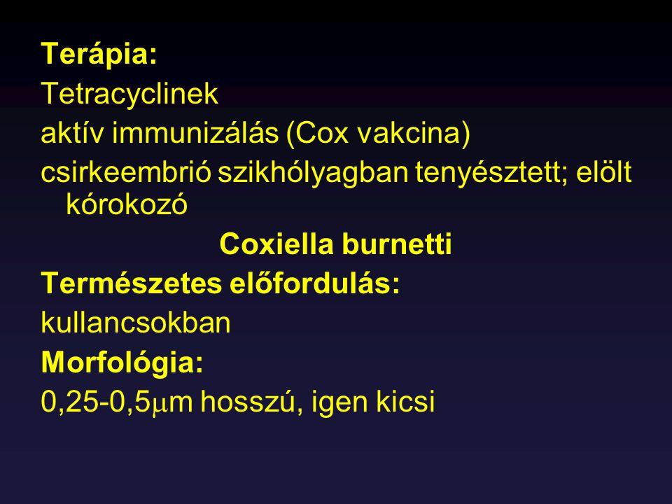 Terápia: Tetracyclinek aktív immunizálás (Cox vakcina) csirkeembrió szikhólyagban tenyésztett; elölt kórokozó Coxiella burnetti Természetes előfordulá