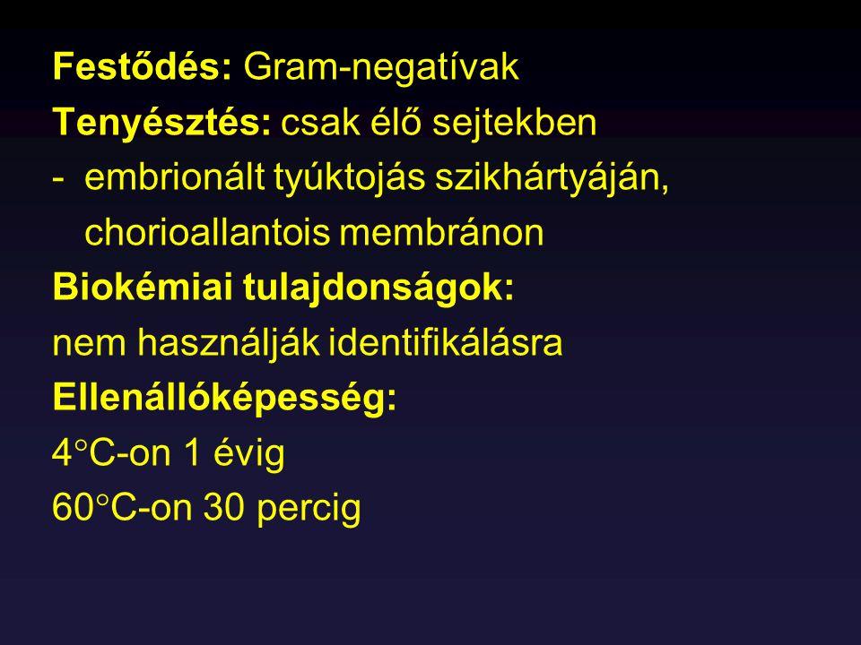 Festődés: Gram-negatívak Tenyésztés: csak élő sejtekben -embrionált tyúktojás szikhártyáján, chorioallantois membránon Biokémiai tulajdonságok: nem ha