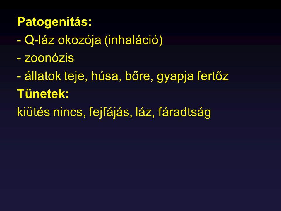 Patogenitás: - Q-láz okozója (inhaláció) - zoonózis - állatok teje, húsa, bőre, gyapja fertőz Tünetek: kiütés nincs, fejfájás, láz, fáradtság