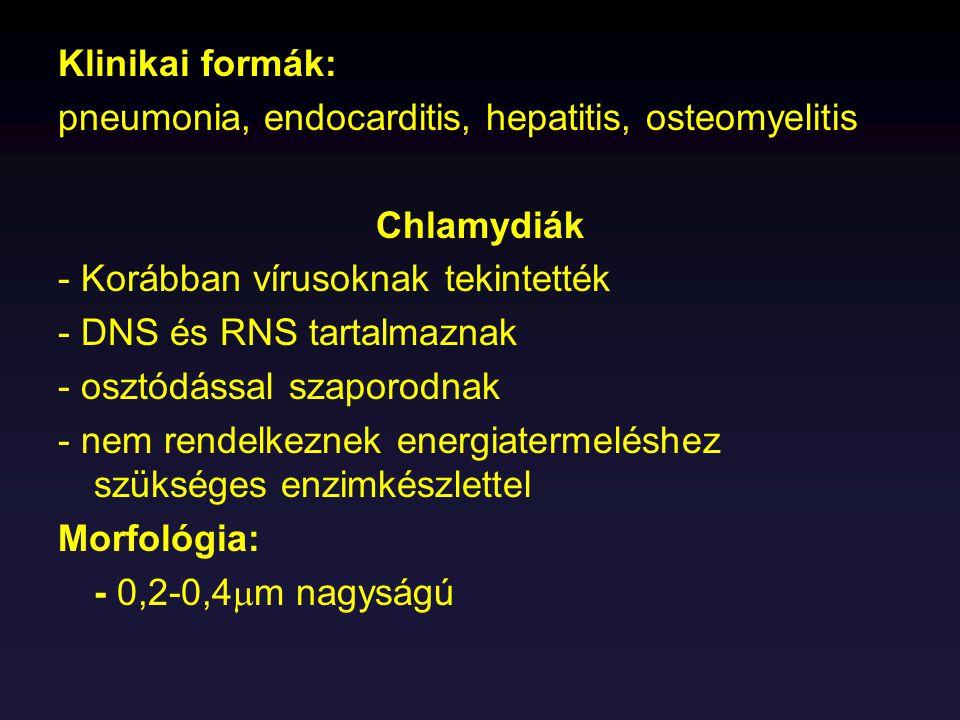 Klinikai formák: pneumonia, endocarditis, hepatitis, osteomyelitis Chlamydiák - Korábban vírusoknak tekintették - DNS és RNS tartalmaznak - osztódássa
