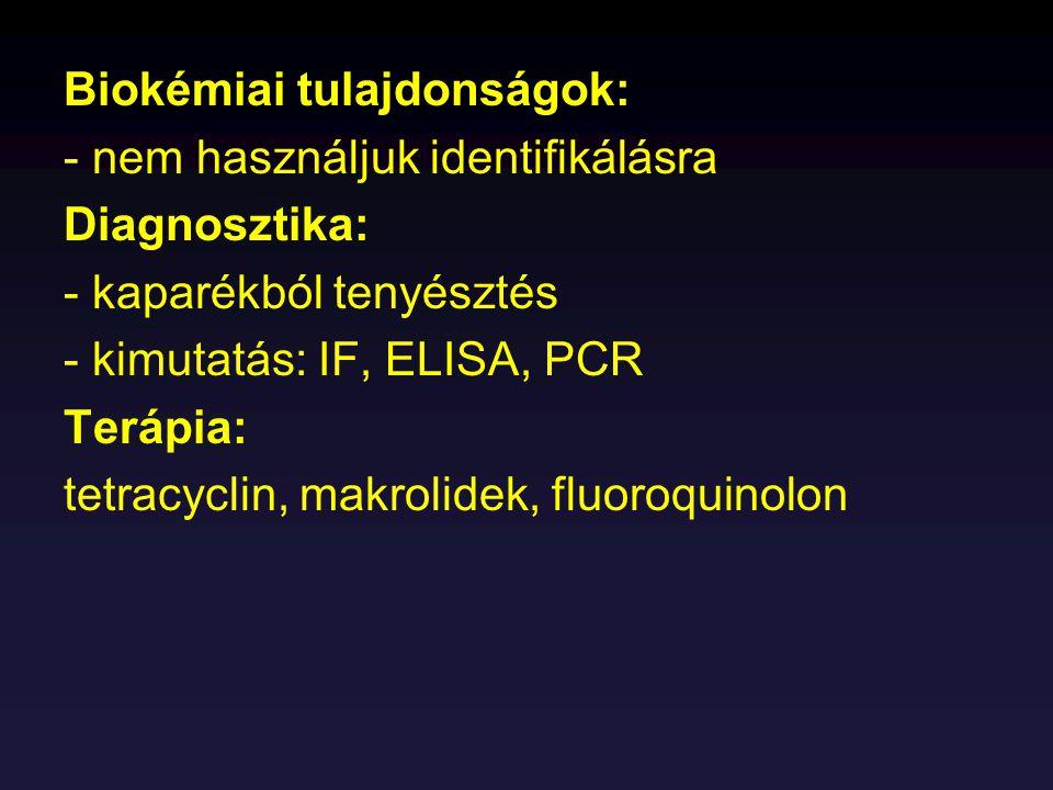Biokémiai tulajdonságok: - nem használjuk identifikálásra Diagnosztika: - kaparékból tenyésztés - kimutatás: IF, ELISA, PCR Terápia: tetracyclin, makr