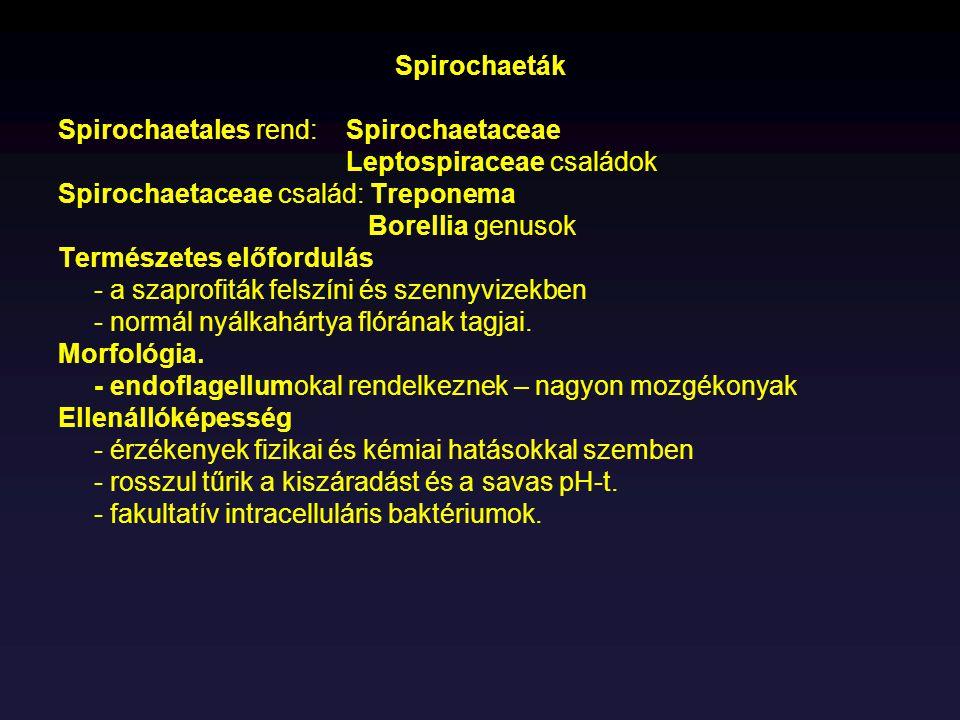Spirochaeták Spirochaetales rend: Spirochaetaceae Leptospiraceae családok Spirochaetaceae család: Treponema Borellia genusok Természetes előfordulás -