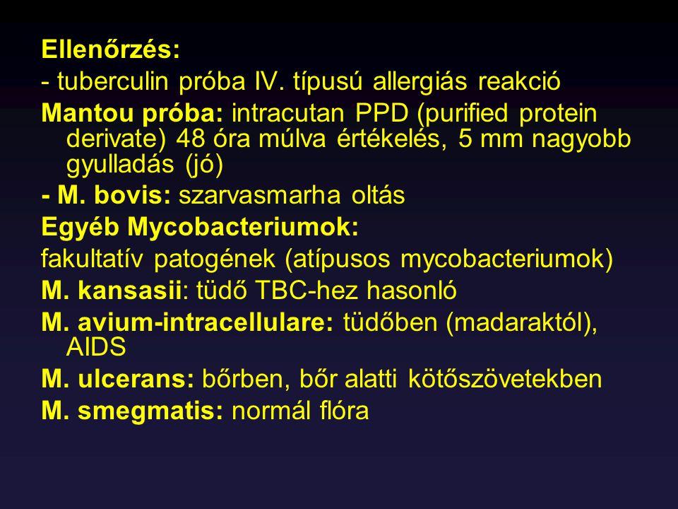 Antibiotikum érzékenység: Tetracyclin Kórkép: Rickettsiosisok R.