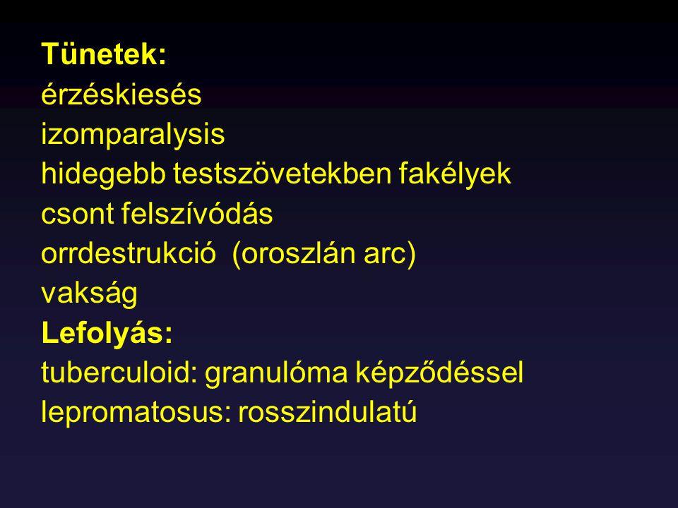 Tünetek: - láz, ködös állapot, bőrkiütések, keringési zavarok Késői recidiva: Brill féle betegség (tetű nélkül) Diagnosztika: Weil-Felix reakció (agglutináció) Ag: Proteus OX 19 törzs