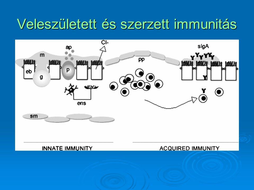 Veleszületett és szerzett immunitás
