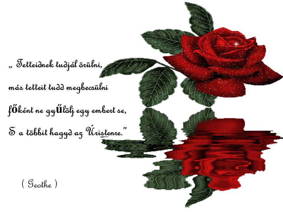 Minden nap egy – egy szál virág többet jelent, mint egy egész csokor ünnepélyes alkalmakkor ( Peruimondás )