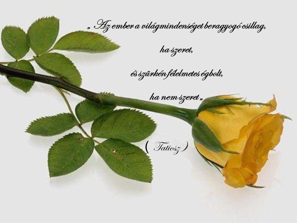 Az élet egy angolkering ő, mit eltáncolsz a sírig. Sorsod csupán attól függ hogy kivel táncolod végig. ( Goethe )