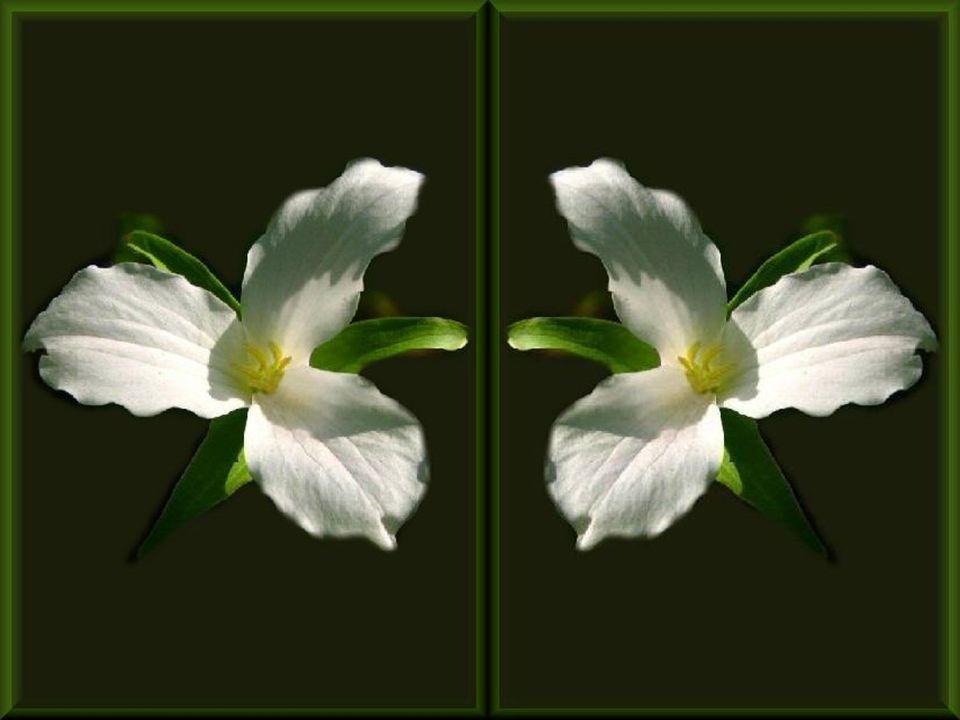 Én nem számítok semmi kegyelemre Én felettem is végig zúg a szél, Lelkemnek alvó, rózsaszirmos kertje Jobban megvédve nincs a többinél.