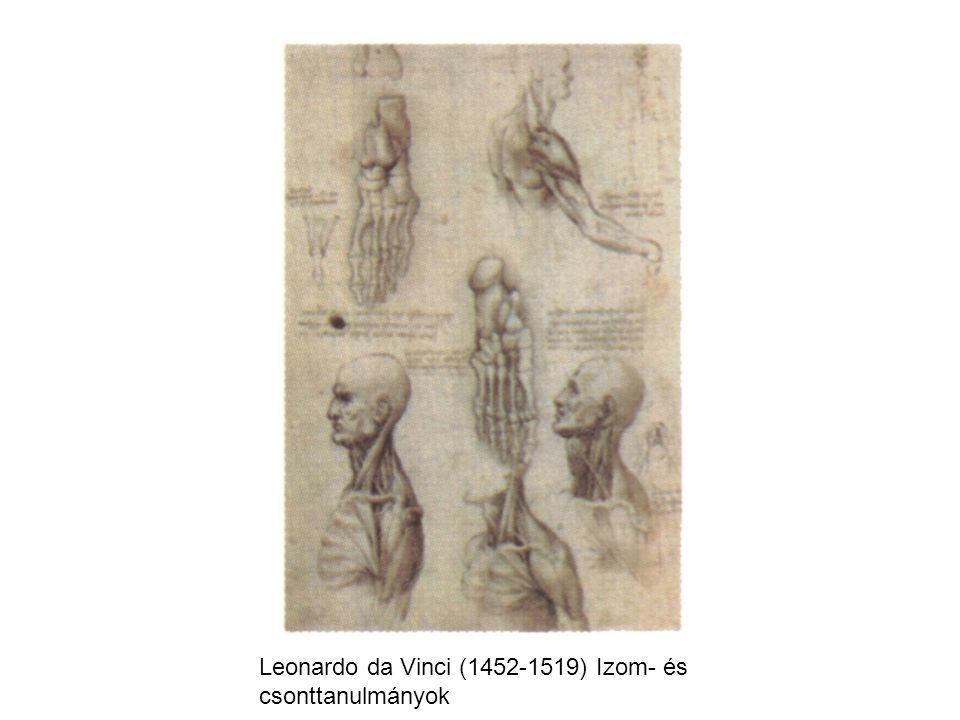Leonardo da Vinci (1452-1519) Izom- és csonttanulmányok
