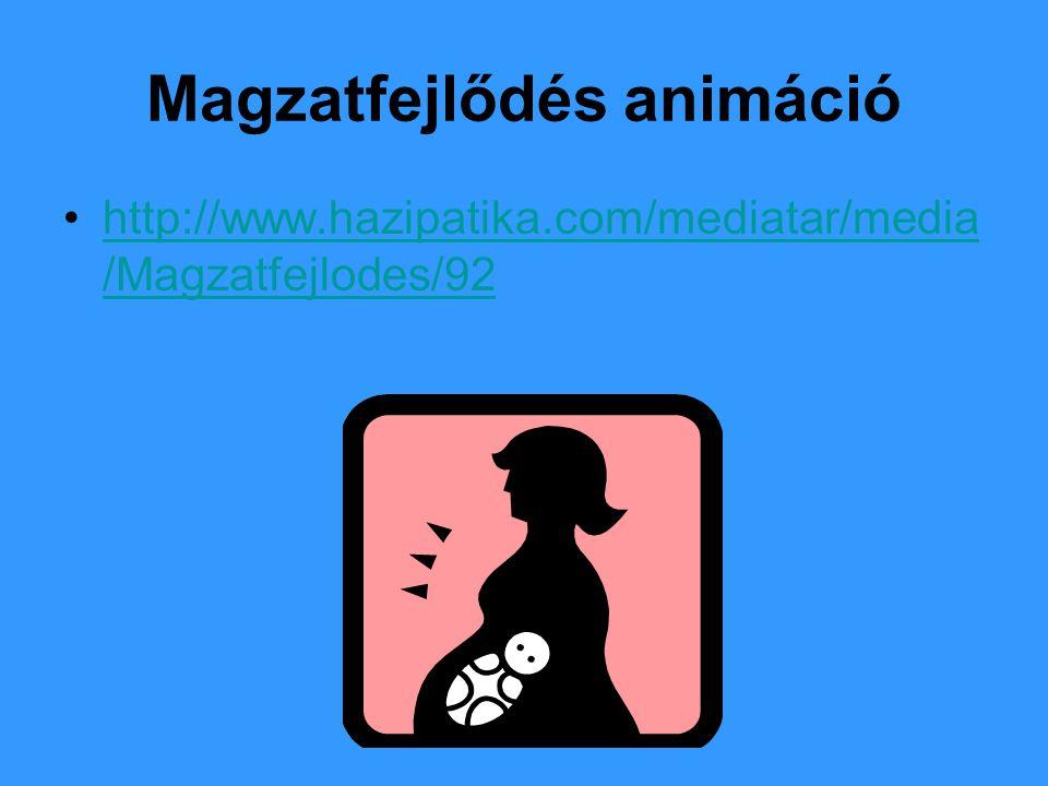 Magzatfejlődés animáció http://www.hazipatika.com/mediatar/media /Magzatfejlodes/92http://www.hazipatika.com/mediatar/media /Magzatfejlodes/92