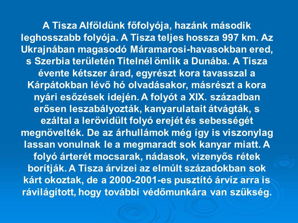 A Tisza Alföldünk főfolyója, hazánk második leghosszabb folyója. A Tisza teljes hossza 997 km. Az Ukrajnában magasodó Máramarosi-havasokban ered, s Sz
