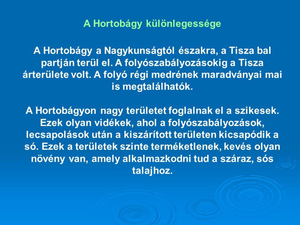 A Hortobágy különlegessége A Hortobágy a Nagykunságtól északra, a Tisza bal partján terül el. A folyószabályozásokig a Tisza árterülete volt. A folyó