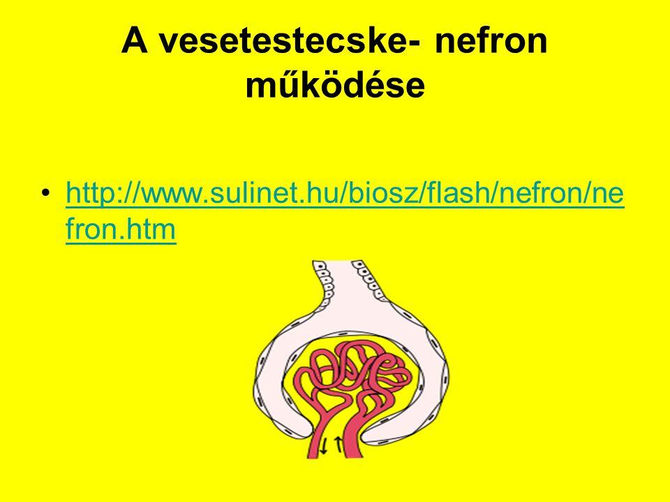 A vesetestecske- nefron működése http://www.sulinet.hu/biosz/flash/nefron/ne fron.htmhttp://www.sulinet.hu/biosz/flash/nefron/ne fron.htm
