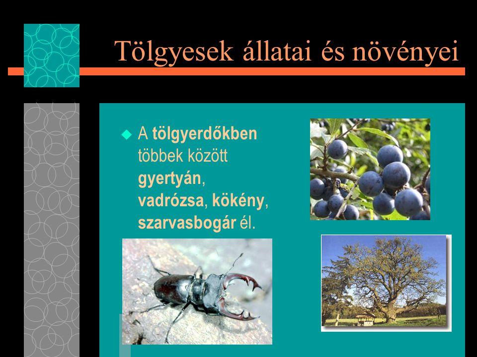 Tölgyesek állatai és növényei  A tölgyerdőkben többek között gyertyán, vadrózsa, kökény, szarvasbogár él.