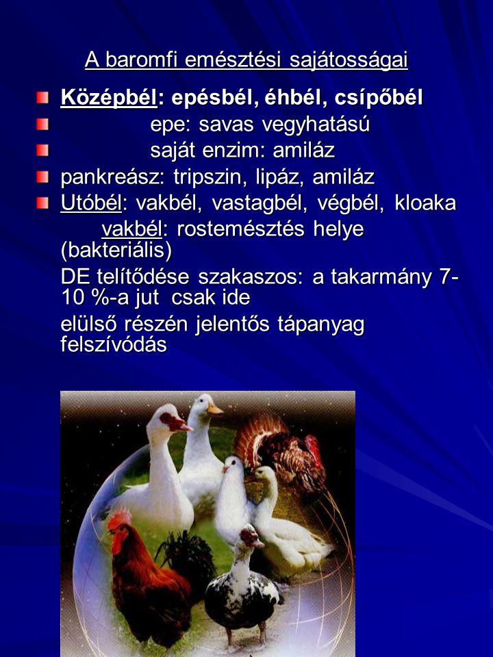 A baromfi emésztési sajátosságai Középbél: epésbél, éhbél, csípőbél epe: savas vegyhatású epe: savas vegyhatású saját enzim: amiláz saját enzim: amilá