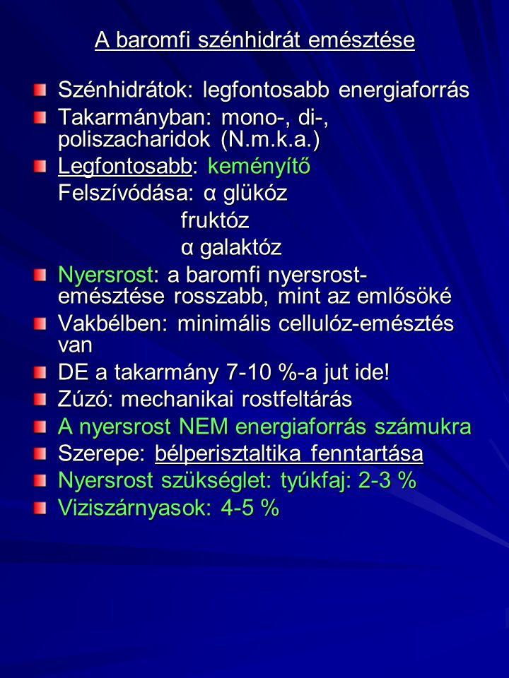 A baromfi szénhidrát emésztése Szénhidrátok: legfontosabb energiaforrás Takarmányban: mono-, di-, poliszacharidok (N.m.k.a.) Legfontosabb: keményítő F