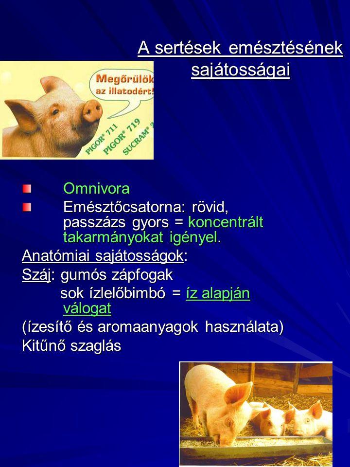 A sertések emésztésének sajátosságai Omnivora Emésztőcsatorna: rövid, passzázs gyors = koncentrált takarmányokat igényel. Anatómiai sajátosságok: Száj
