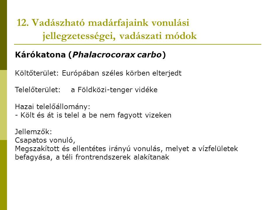 12. Vadászható madárfajaink vonulási jellegzetességei, vadászati módok Kárókatona (Phalacrocorax carbo) Költőterület: Európában széles körben elterjed