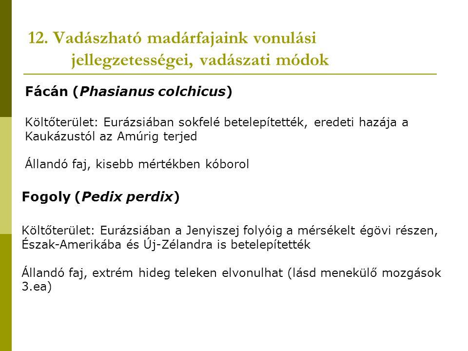 12. Vadászható madárfajaink vonulási jellegzetességei, vadászati módok Fácán (Phasianus colchicus) Költőterület: Eurázsiában sokfelé betelepítették, e
