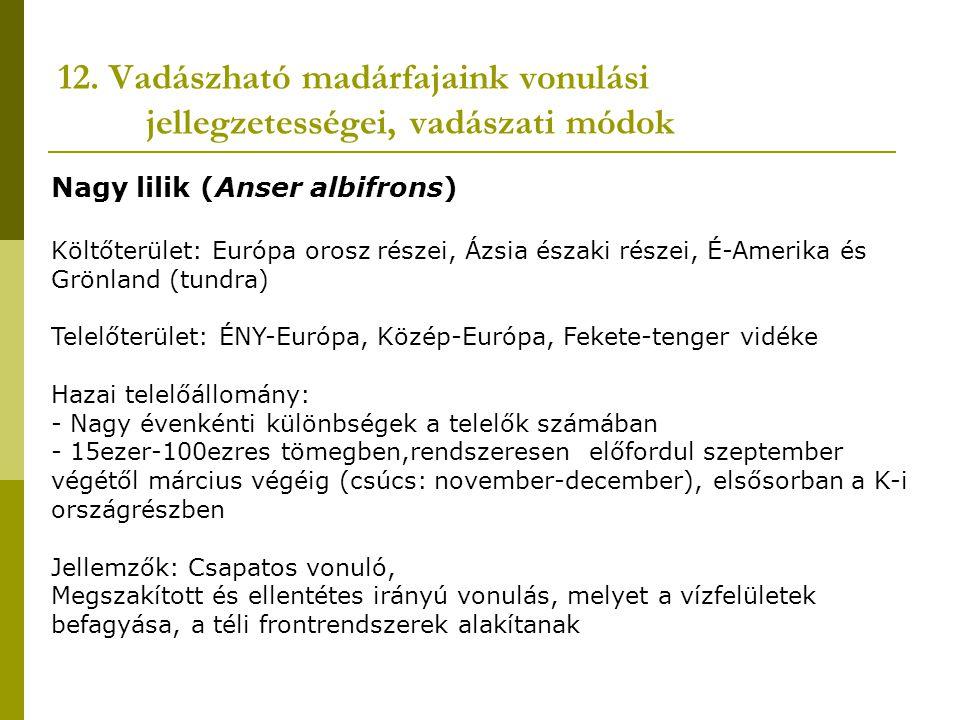 12. Vadászható madárfajaink vonulási jellegzetességei, vadászati módok Nagy lilik (Anser albifrons) Költőterület: Európa orosz részei, Ázsia északi ré