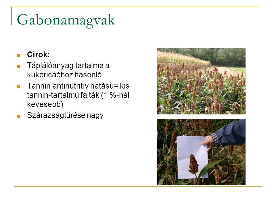 Gabonamagvak Cirok: Táplálóanyag tartalma a kukoricáéhoz hasonló Tannin antinutritív hatású= kis tannin-tartalmú fajták (1 %-nál kevesebb) Szárazságtű