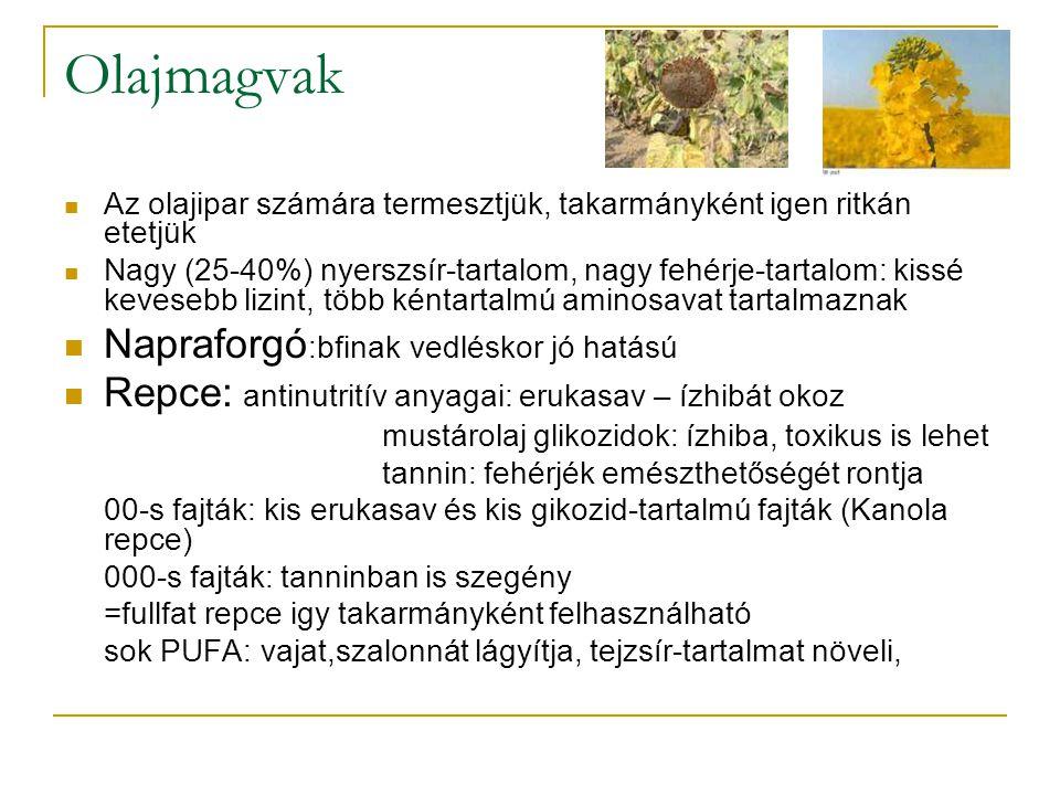 Olajmagvak Az olajipar számára termesztjük, takarmányként igen ritkán etetjük Nagy (25-40%) nyerszsír-tartalom, nagy fehérje-tartalom: kissé kevesebb lizint, több kéntartalmú aminosavat tartalmaznak Napraforgó :bfinak vedléskor jó hatású Repce: antinutritív anyagai: erukasav – ízhibát okoz mustárolaj glikozidok: ízhiba, toxikus is lehet tannin: fehérjék emészthetőségét rontja 00-s fajták: kis erukasav és kis gikozid-tartalmú fajták (Kanola repce) 000-s fajták: tanninban is szegény =fullfat repce igy takarmányként felhasználható sok PUFA: vajat,szalonnát lágyítja, tejzsír-tartalmat növeli,