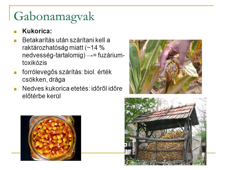 Gabonamagvak Kukorica: Betakarítás után szárítani kell a raktározhatóság miatt (~14 % nedvesség-tartalomig) →= fuzárium- toxikózis forrólevegős szárít