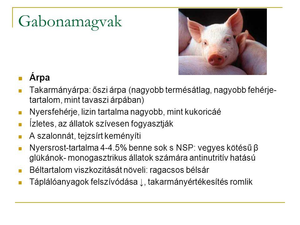 Gabonamagvak Árpa Takarmányárpa: őszi árpa (nagyobb termésátlag, nagyobb fehérje- tartalom, mint tavaszi árpában) Nyersfehérje, lizin tartalma nagyobb, mint kukoricáé Ízletes, az állatok szívesen fogyasztják A szalonnát, tejzsírt keményíti Nyersrost-tartalma 4-4.5% benne sok s NSP: vegyes kötésű β glükánok- monogasztrikus állatok számára antinutritív hatású Béltartalom viszkozitását növeli: ragacsos bélsár Táplálóanyagok felszívódása ↓, takarmányértékesítés romlik