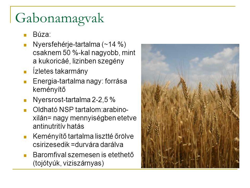 Gabonamagvak Búza: Nyersfehérje-tartalma (~14 %) csaknem 50 %-kal nagyobb, mint a kukoricáé, lizinben szegény Ízletes takarmány Energia-tartalma nagy: forrása keményítő Nyersrost-tartalma 2-2,5 % Oldható NSP tartalom:arabino- xilán= nagy mennyiségben etetve antinutritív hatás Keményítő tartalma lisztté őrölve csirizesedik =durvára darálva Baromfival szemesen is etethető (tojótyúk, viziszárnyas)