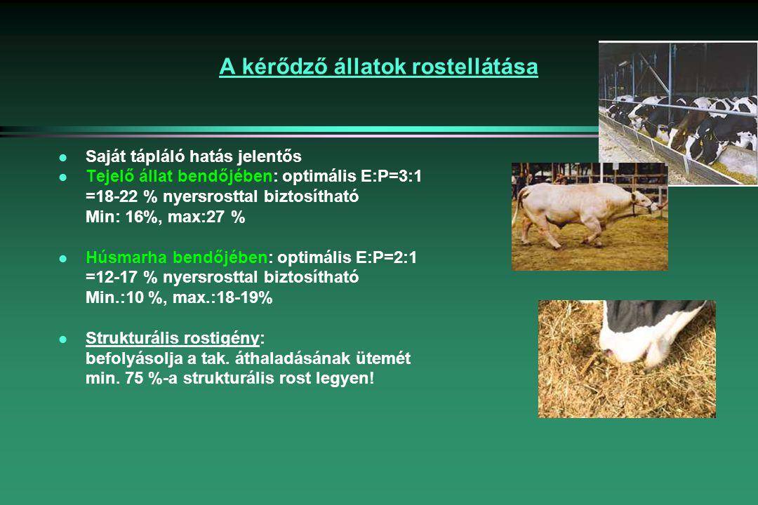 A kérődző állatok rostellátása l Saját tápláló hatás jelentős l Tejelő állat bendőjében: optimális E:P=3:1 =18-22 % nyersrosttal biztosítható Min: 16%, max:27 % l Húsmarha bendőjében: optimális E:P=2:1 =12-17 % nyersrosttal biztosítható Min.:10 %, max.:18-19% l Strukturális rostigény: befolyásolja a tak.